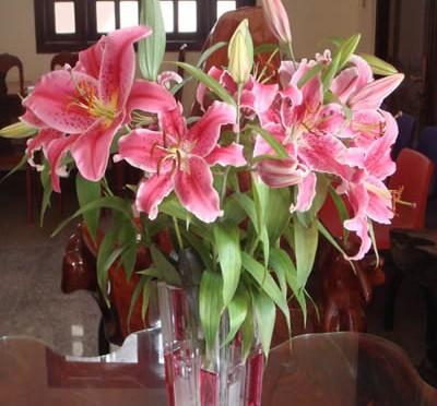Cách giữ hoa tươi lâu trong ngày Tết