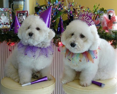 Ảnh động vật chúc mừng năm mới 2015