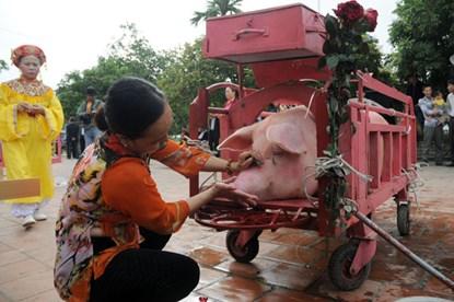 Dân Ném Thượng chém lợn giữa sân đình