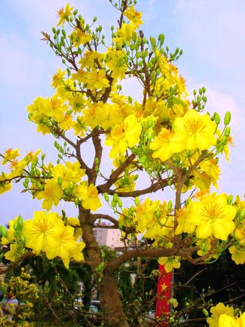 Hoa đẹp đặc trưng ngày tết