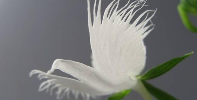 Loài hoa hình chim hạc sải cánh tuyệt đẹp