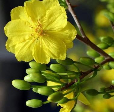 Câu đối tết món quà Xuân
